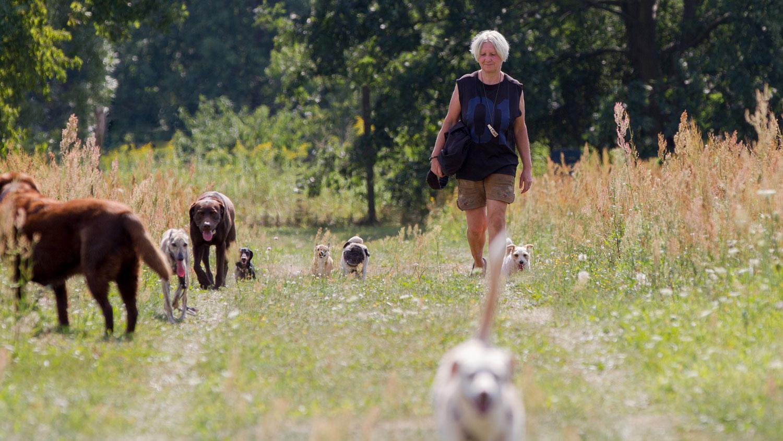 Ausbildung zum Hundebetreuer