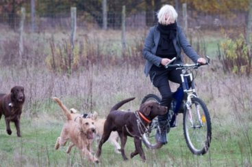 Hundehaltertraining